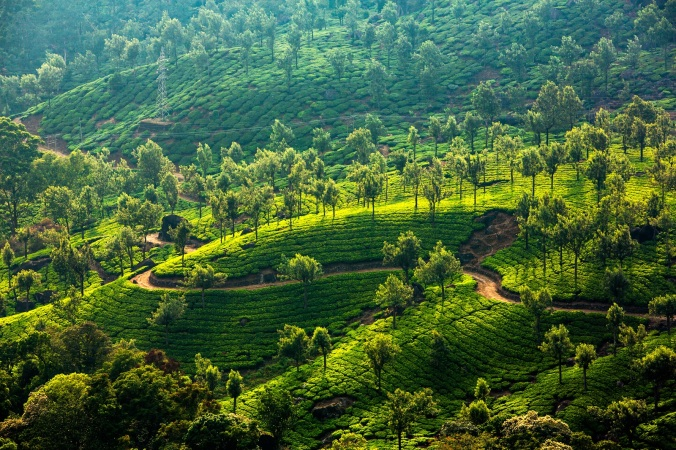 bigstock-Landscape-of-the-tea-plantatio-42921313
